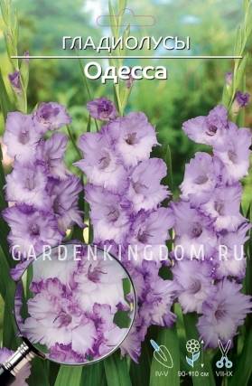 Гладиолус крупноцветковый ОДЕССА, 5 шт.