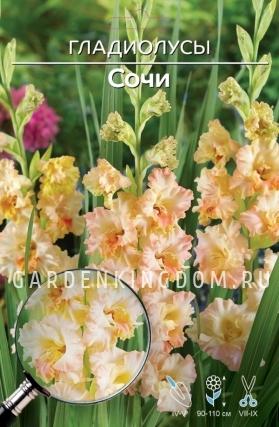 Гладиолус крупноцветковый СОЧИ, 5 шт.