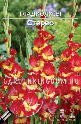 Гладиолус крупноцветковый СТЕРЕО, 7 шт.