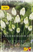 Мускари  AUCHERI WHITE MAGIC, 20 шт