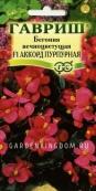 Бегония вечноцветущая F1 Аккорд Пурпурная, 5 шт. в пробирке