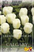 Тюльпан простой ранний CALGARY, 10 шт