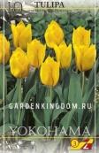 Тюльпан простой ранний YOKOHAMA, 25 шт