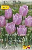 Тюльпан триумф  HOLLAND BEAUTY, 25 шт