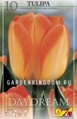 Тюльпан Дарвинов гибрид DAYDREAM, 10 шт