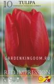 Тюльпан Дарвинов гибрид RED IMPRESSION, 10 шт
