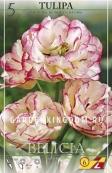 Тюльпан многоцветковый BELICIA, 10 шт
