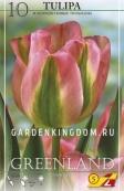 Тюльпан зеленоцветковый  GREENLAND, 10 шт