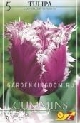 Тюльпан бахромчатый  CUMMINS, 5 шт