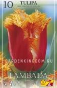 Тюльпан бахромчатый  LAMBADA, 10 шт