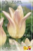 Тюльпан лилейный  ELEGANT LADY, 10 шт