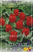 Тюльпан Грейга RED CECIL, 10 шт
