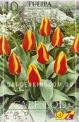 Тюльпан Грейга CAPE COD, 10 шт