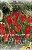 Тюльпан ботанический BATALINII RED JEWEL, 15 шт