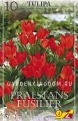 Тюльпан многоцветковый PRAESTANS FUSILIER, 10 шт
