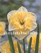 Нарцисс орхидейный  PRINTAL, 5 шт
