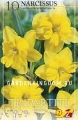 Нарцисс ботанический  TRIPARTITE, 10 шт