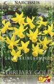 Нарцисс ботанический  FEBRUARY GOLD, 5 шт