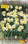 Нарцисс ботанический  MINNOW, 20 шт