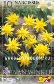 Нарцисс ботанический  RIP  VAN  WINKLE, 10 шт
