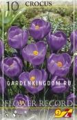 Крокус крупноцветковый FLOWER RECORD, 10 шт