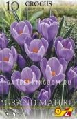 Крокус крупноцветковый GRAND  MAITRE, 10 шт