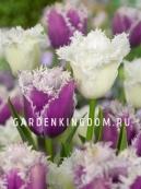 Смесь тюльпанов бахромчатых  TWINKLING DIAMONDS, 15 шт