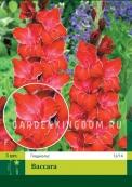 Гладиолус крупноцветковый BACCARA, 20 шт.