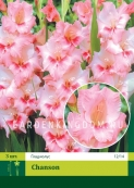 Гладиолус крупноцветковый CHANSON, 20 шт.