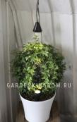 Подсветка для комнатных растений Дуэт, 2 шт