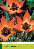 Тюльпан ботанический LITTLE PRINCESS, 20 шт