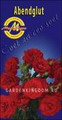 Роза флорибунда ABENDGLUT