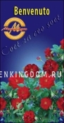 Роза парковая (грандифлора)  BENVENUTO