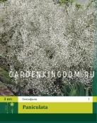 Гипсофила PANIKULATA,  3 шт