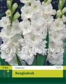 Гладиолус крупноцветковый BANGLADESH, 3 шт.