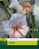 Гладиолус карликовый HALLEY, 3 шт.
