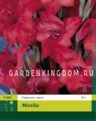 Гладиолус карликовый MIRELLA, 3 шт.