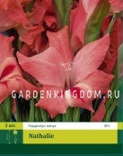 Гладиолус карликовый NATHALIE, 3 шт.