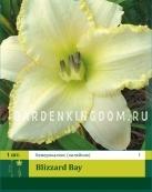 Лилейник (хемерокаллис) BLIZZARD BAY,  1 шт.