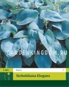 Хоста  sieboldiana ELEGANS, 1 шт.