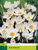 Крокус ботанический ARD SCHENK, 20 шт