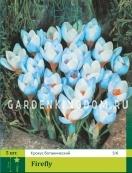 Крокус ботанический  FIREFLY, 50 шт