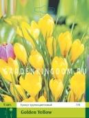 Крокус крупноцветковые GOLDEN YELLOW, 50 шт