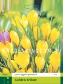 Крокус крупноцветковые GOLDEN YELLOW, 5 шт
