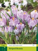 Крокус крупноцветковые STRIPED BEAUTY, 50 шт