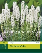 Лиатрис FLORISTAN WHITE,  5 шт
