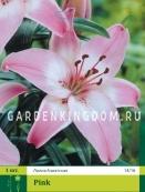 Лилия азиатская ASIATIC PINK, 1 шт