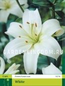 Лилия азиатская ASIATIC WHITE, 1 шт
