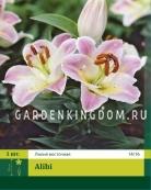 Лилия восточная ALIBI, 1 шт