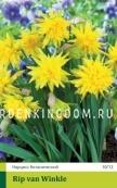 Нарцисс ботанический  RIP  VAN  WINKLE, 20 шт